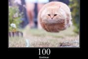HTTP Staus Cats
